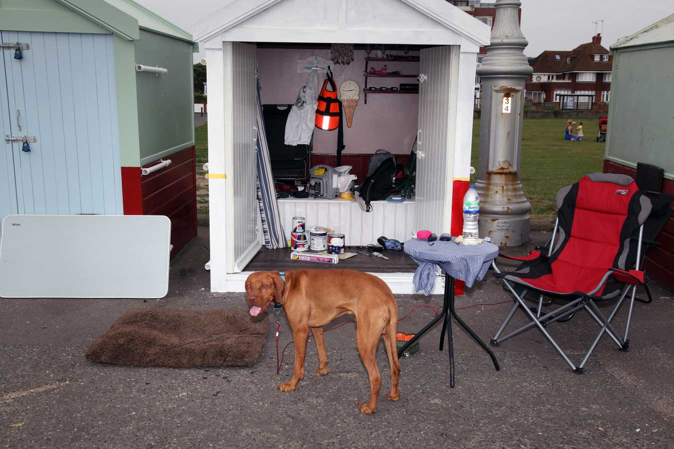beach hut dog
