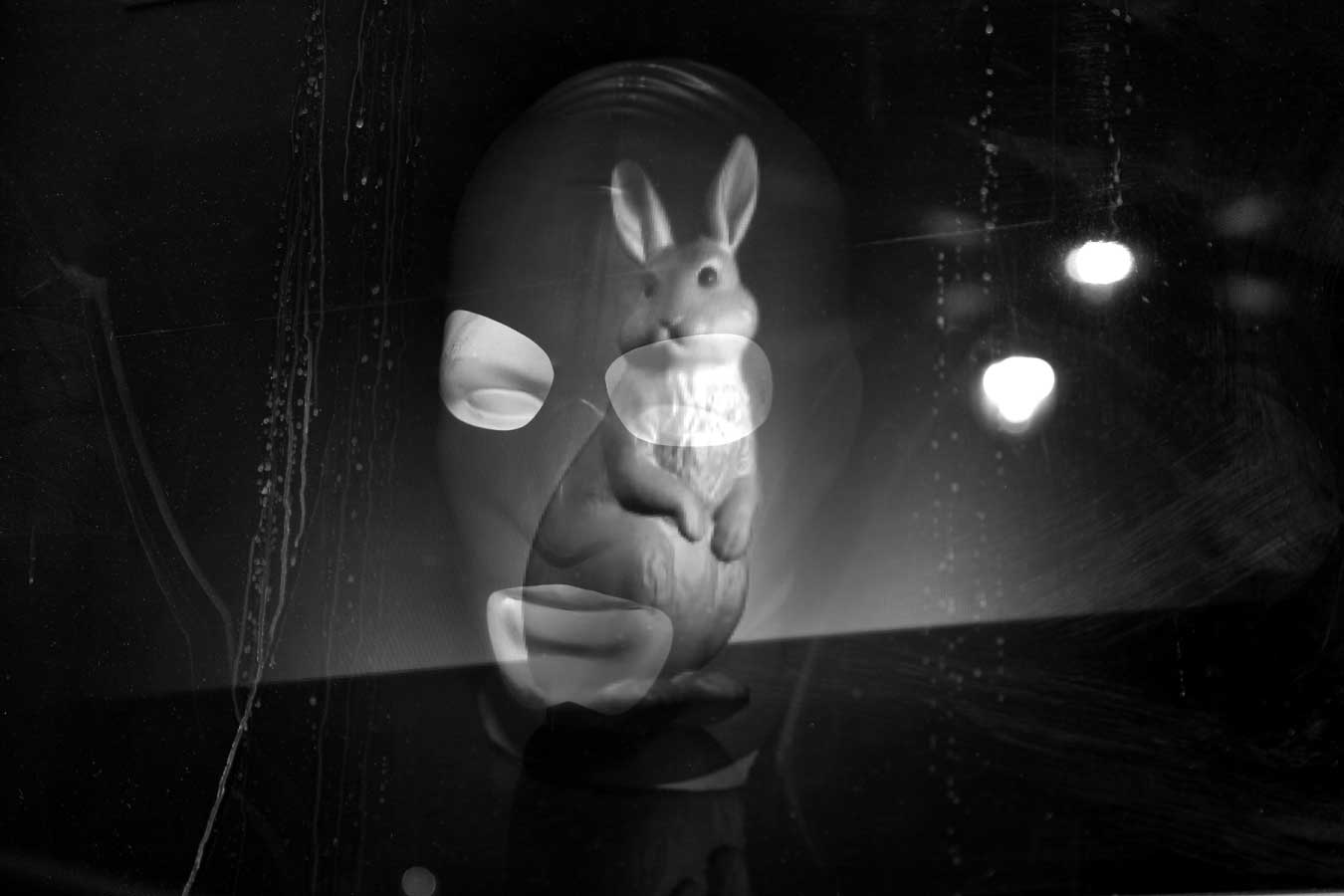 rabit with mask